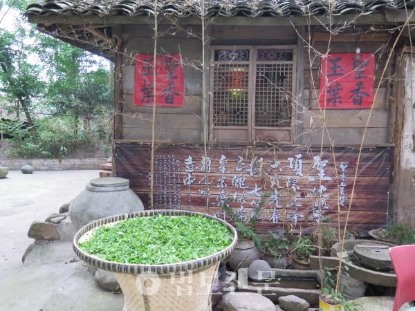 햇볕에 널어 백차를 만들고 있는 중국의 민가.
